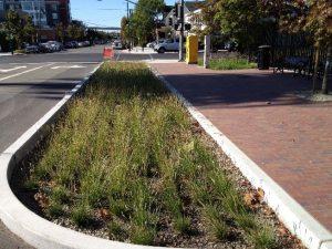 bioretention_nmsa